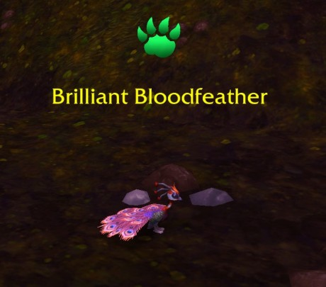 Brillant Bloodfeather